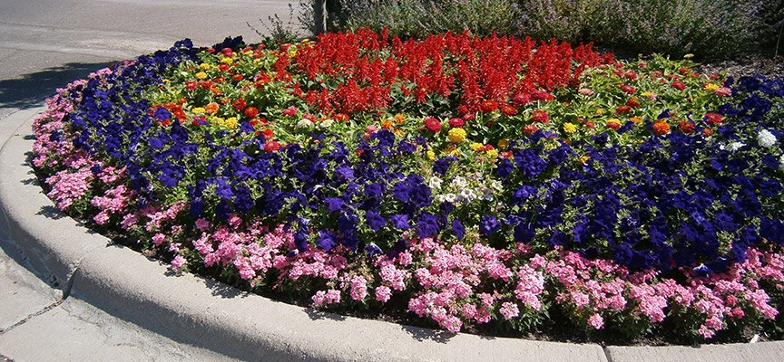 Minneapolis Exterior Plant Services