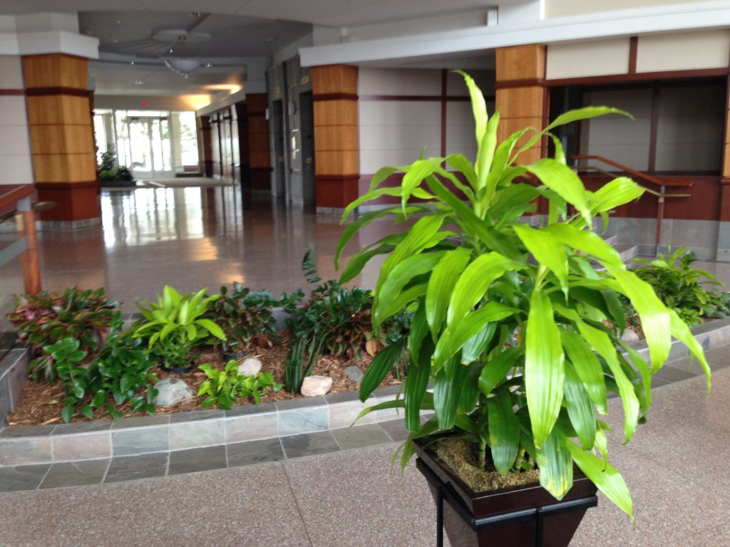 Interior Plant Service Minneapolis